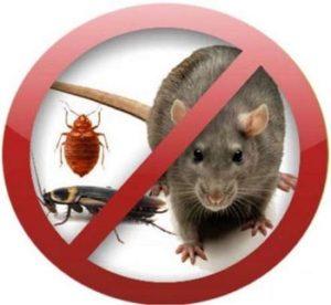 Профессиональное уничтожение насекомых и грызунов